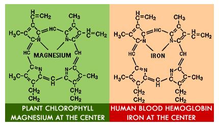 Hemoglobin vs Chlorophyll