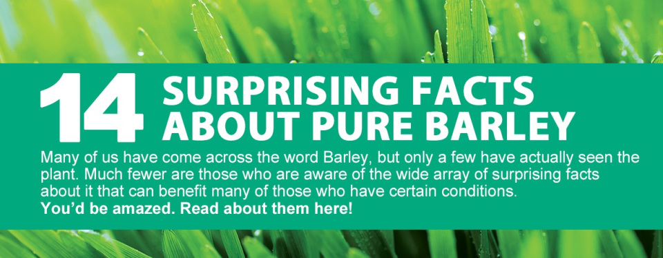 14 Shocking Facts About Barley Grass You Didn't Know!